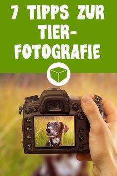 Die 7 ultimativen Tipps zur perfekten Tierfotografie. So fotografierst Du deinen Vierbeiner, egal ob Hund oder Katze, richtig. Zusätzlich haben wir ein umfassendes EBook mit weiteren Tipps zum kostenlosen Download für Dich. #hund #katze #tierfoto #tierfotografie