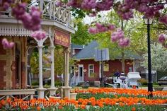 Niagara-on-the-Lake... I love this place.  Another one of my repeat trips.  It is the perfect mix of vinyards, shops and the Great Lakes and it is still only 15 minutes from Niagara Falls and all the wonderful day and nightlife.