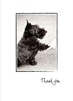 Scottie Dog Thank You