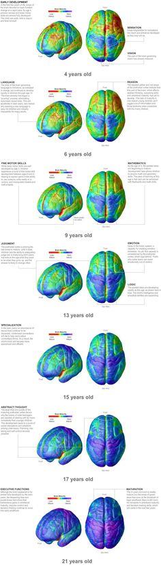 Maturation of the human brain http://media-cache-ak0.pinimg.com/originals/26/db/15/26db157020e9352117675031839bfa19.jpg