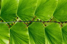 geometrie-naturali-Perfect-Geometric-Patterns-In-Nature17__880.jpg (880×589)