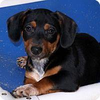 Adopt A Pet :: Frisco - Towson, MD