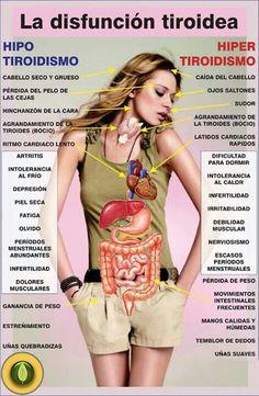 Síntomas de la disfunción tiroidea: hipotiroidismo e hipertiroidismo Health And Nutrition, Health And Wellness, Health Care, Health And Beauty, Health Fitness, Thyroid Health, Health Remedies, Healthy Tips, Human Body