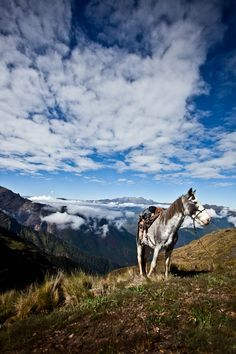 Horseback riding through the Andes? Yes please