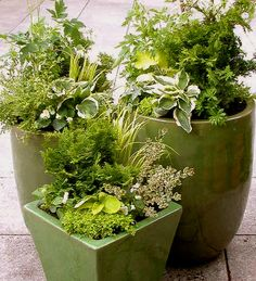 Design Tips for Container Gardens