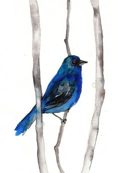 Indigo Bunting - Out of retirement for a brief bit this November - from Mai Autumn