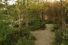 Sarah Price Landscapes   » RHS Chelsea 2012