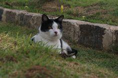Jhuly é a gata da Alessandra Alves