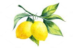Watercolor lemon branch by elyaka on Creative Market