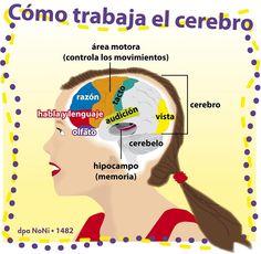 La memoria: ¿Qué hace el cerebro cuando aprende algo nuevo?