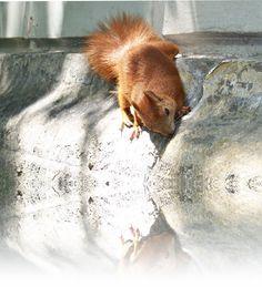 squirrel by Katia79 on DeviantArt