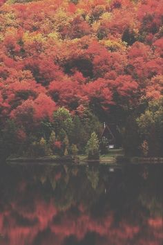 Autumn lake forest