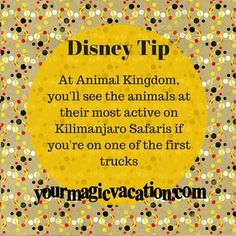 At Animal Kingdom you'll see the animals at their most active on Kilimanjaro Safaris if you're on one of the first ones.