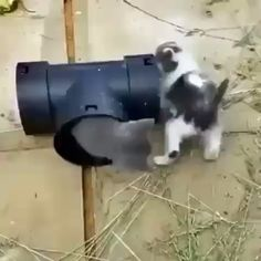 Cute Baby Cats, Funny Cute Cats, Cute Little Animals, Cute Cats And Kittens, Cute Funny Animals, Kittens Cutest, Cute Dogs, Cute Animal Videos, Funny Animal Pictures