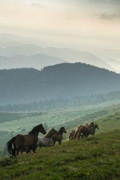 Beautiful Creatures, Animals Beautiful, Cute Animals, Most Beautiful Horses, Pretty Horses, Horse Girl, Horse Love, Horse Wallpaper, Nature Aesthetic