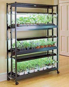 small indoor shelf garden