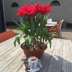 Capuccino zwischen Tulpen im Café von Fluwel's Tulpenland. Danke fürs Teilen, dreamsinheels