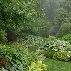 Lots of plants with big leaves make the garden more lush