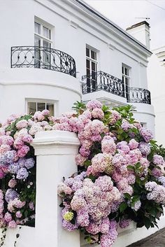 NgLp Designs shares Garden Design with Hydrangeas: beautiful white stucco home facade with black railing details as the backdrop for … Hortensia Hydrangea, Hydrangea Colors, Hydrangea Care, Purple Hydrangeas, White Hydrangea Garden, Pink Garden, Garden Shrubs, Shade Garden, Garden Paths