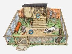 An poster sized print, approx (other products available) - Illustration of pet rabbits in wire enclosure showing hutch - Image supplied by Fine Art Storehouse - Poster printed in Australia Rabbit Wire, Rabbit Run, Rabbit Cages, Pet Rabbit, Rabbit Enclosure, Lapin Art, Bunny Hutch, Raising Rabbits, Rabbit Hutches
