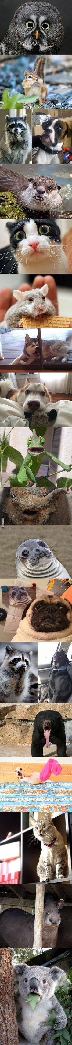 Animals in complete astonishment