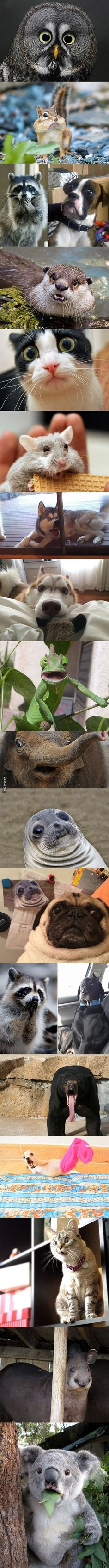 Animals in complete astonishment