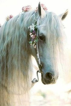 Beautiful White Horse Laced With Delicate Pink Flowers in Her Mane. Beautiful White Horse Laced With Delicate Pink Flowers in Her Mane. - Art Of Equitation Beautiful Creatures, Animals Beautiful, Most Beautiful Horses, Animals Amazing, Animals And Pets, Cute Animals, Wild Animals, Baby Animals, Gypsy Horse