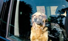5 Factors That Put a Dog at Risk for Heatstroke