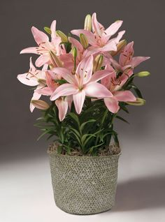 Give her the gift of delight with a blooming bulb basket - Spring Garden Series® Beautiful Bulb Baskets -- Orvis on Orvis.com!