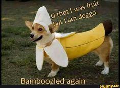 fruit doggo