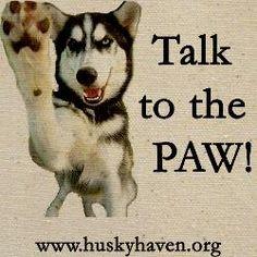 Siberian Husky Gifts, T-Shirts, & Clothing   Siberian Husky Merchandise