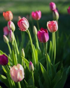 Aamu puutarhassa || @hetkiamaalla Home Photo, Spring Time, Plants, Instagram, Photos, Planters, Plant, Planting, Cake Smash Pictures