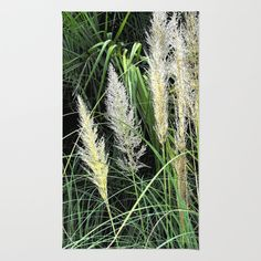 Thinking green - this is an original photograph of some grasses which grow in Florida.