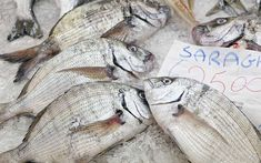 A handy, alphabetized guide with photos of the most common fish and other seafood items found on Greek menus with their English, Greek and scientific names. Greek Fish, Greek Menu, Seafood, Greece, Sea Food, Greece Country