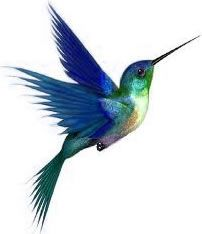 Websites & related products for the non-profit community of Belize by Kolibri Web Design. Hummingbird Tattoo Watercolor, Hummingbird Wings, Watercolor Sketch, Watercolor Paintings, Cover Pics For Facebook, Chihuahua Art, Butterfly Wall Decals, Fu Dog, Subtle Tattoos