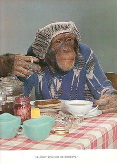 monkey smooth