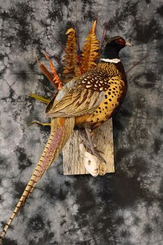 Pheasant Terry Redlin, Bird Taxidermy, Man Cave Basement, Pheasant, Natural History, Insects, Hunting, Barn Boards, Wildlife