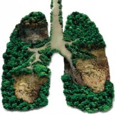 Forests are the lungs of the Earth. www.dogwoodalliance.org