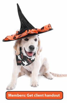 Don't feed your pets Halloween candy, especially if it contains chocolate or xylitol (a common sugar substitute); Make sure your pet has proper ID. Pet Halloween Costumes, Cute Costumes, Dog Halloween, Dog Costumes, Happy Halloween, Animal Articles, Dog Safety, Safety Tips, Companion Dog