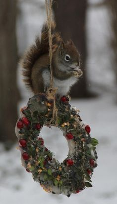 ...and of course the squirrels! #wreaths