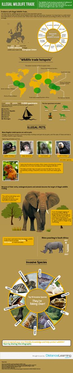 The wildlife trade involves hundreds of millions of individual plants and animals from tens of thousands of species all over the world, but not all of