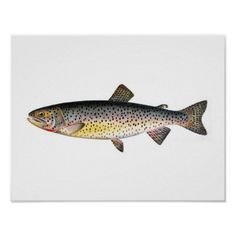 Tahoe Trout Fishing Poster