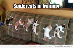 cat memes spidercats in training photo