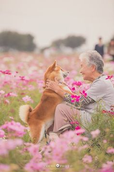 15 Facts That Prove Shiba Inus Are The Greatest Dogs Japanese Dog Breeds, Japanese Dogs, Akita Dog, Animals For Kids, Animals And Pets, Cute Animals, Shiba Inu, What Dogs, Mini Dogs