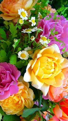 Romantic Flowers, Pretty Flowers, Grow Organic, Rose Wallpaper, Beautiful Roses, Beautiful Places, Floral Bouquets, Pink Roses, Flower Power
