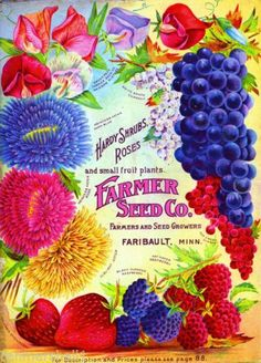 Farmer-Roses-Fruit-Vintage-Flowers-Seed-Packet-Catalogue-Advertisement-Poster