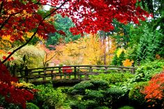 Otoño, naturaleza, puente, madera, árboles, hojas, rojo, verde, amarillo wallpaper