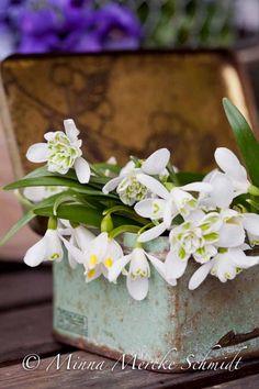 Äntligen snödroppar! | blomsterverkstad | Sköna Hem