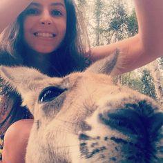 #australia #australianvibes #currumbinwildlifesanctuary #currumbin #colecionandolugares #aroundtheworld #pelomundo #kangaroo #kangaroofeeding #canguru #goldcoast #goldcoastlife #visitgoldcoast #nature #natureza #animais #animals #priceless #amodemais  #takingcare #selfie #selfiewithanimals  by brunapavanni http://ift.tt/1X9mXhV