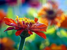 Sunny afternoon by irene gr, via Flickr  What amazing colours!